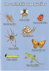 Sample page from Mi pequeño diccionario (My little Spanish dictionary) Brilliant Publications
